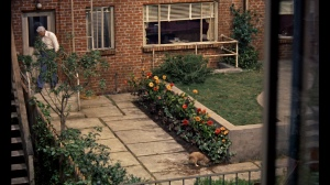 Rear_Window_Dog_digging_up_flower_garden